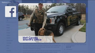 Sheriff: Hall County K-9  may have died from toxic algae