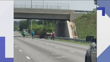 An escaped horse had to be corralled on I-75 in Georgia
