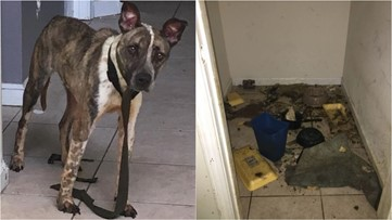 Dog survives two weeks after being abandoned in closet