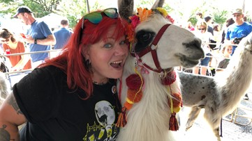 East Atlanta Village is going to be 'crawling' with excitement with return of the llamas!