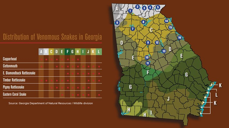 Your guide to the six venomous snakes in Georgia | 11alive.com on texas copperhead snake map, rattlesnake range map, cherskogo range map, copperhead snakes in west tennessee, snakes in ohio map, copperhead and cottonmouth snakes, cottonmouth snake territory map, poisonous snakes in illinois map, copperhead snakes southern illinois, pied-billed grebe range map, copperhead yardage book, coywolf range map, pa rattlesnake map, cottonmouth water moccasin range map, northern copperhead snake map, snakes habitat map, southern leopard frog range map, copperhead snakes in alabama, blue-ringed octopus range map, copperhead snakes in south carolina,