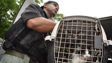 10 animals rescued from LaGrange hoarding situation, police say