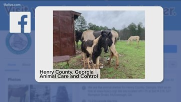 Henry County investigation uncovers 22 malnourished horses