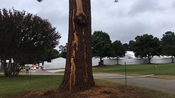 Play resumes Sunday after PGA TOUR Championship lightning strike