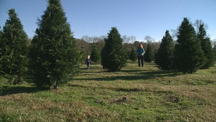 Christmas tree farm helping spread holiday cheer to Georgia military families