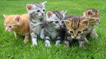 Cat Days of Summer? Multiple agencies offering free adoptions throughout month