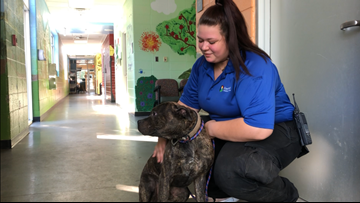 Gwinnett Animal Shelter remains open to the public