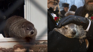 Groundhogs give conflicting forecasts for coming spring
