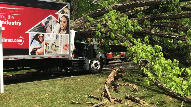 Driver rescued after large oak tree falls on top of delivery truck