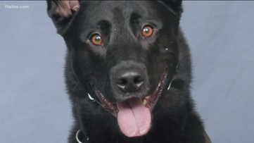 'Perfect storm' of a tragic accident | Authorities explain how K-9 was killed by deputy