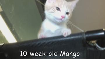 Meet Mango & Buddy: Gwinnett Animal Shelter's pets of the week