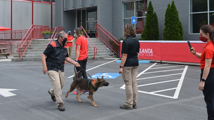 AJC Peachtree Road Race to use COVID-detecting dogs