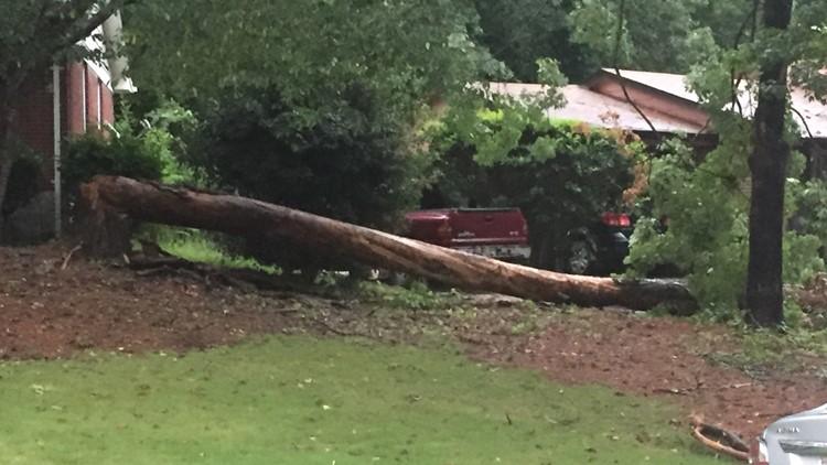 Colorado street tree down