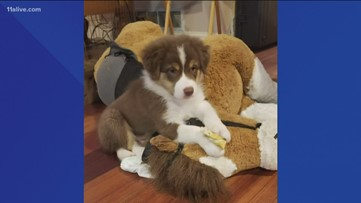Marietta couple who lost dog after swim in Lake Allatoona gifted new pup