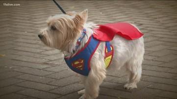 Atlanta Humane Society's Pumpkin Patch and Pet Adoption event