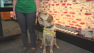 11Alive's 'Puppy with A Purpose' learns collar cues
