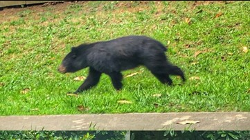 Duluth Police warns residents of bear in area