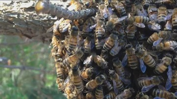 Why is there no need to panic over a swarm of bees?