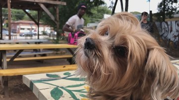 East Atlanta Village is going to the dogs