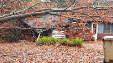 'Lord Jesus, why me?' | Tree falls on Gainesville woman's home during winter storm