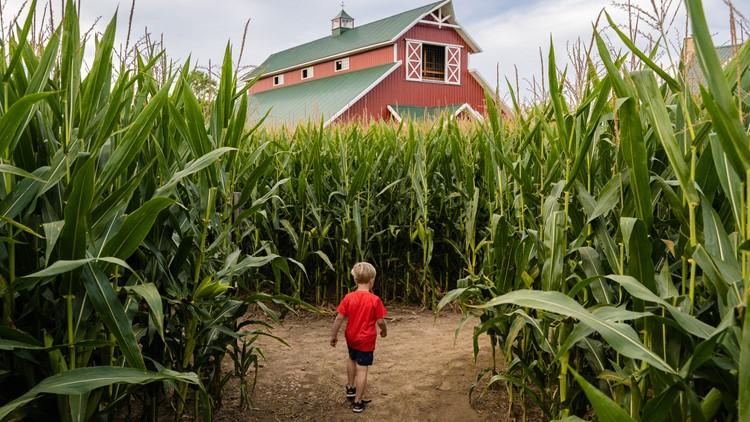 Corn mazes you can check out around Atlanta for the Halloween season