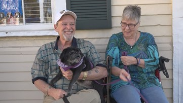 Letters to Carolyn: Woman's loving memory lives on through her three disabled dogs