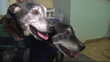 Meet Bella, Girdy, & Mod: Forsyth County Animal Shelter's pets of the week