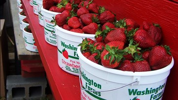 Washington Farms to stop growing strawberries after this year