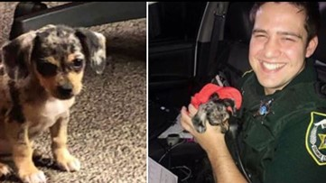 Puppy rescued from flooding car in Florida is given appropriate name