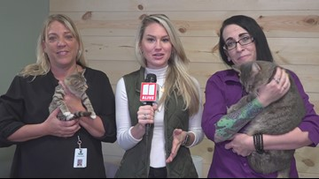 Meet Honey, Leon, & Cary Grant: Forsyth County Animal Shelter's pets of the week
