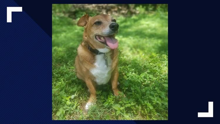 Susan Raney's dog