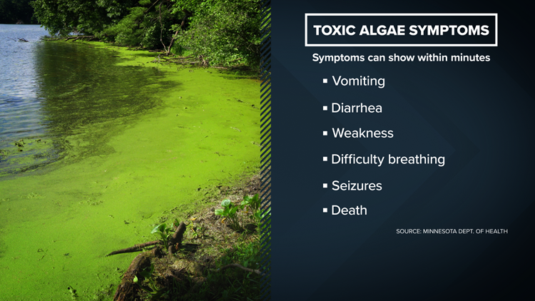 Toxic Algae Symptons
