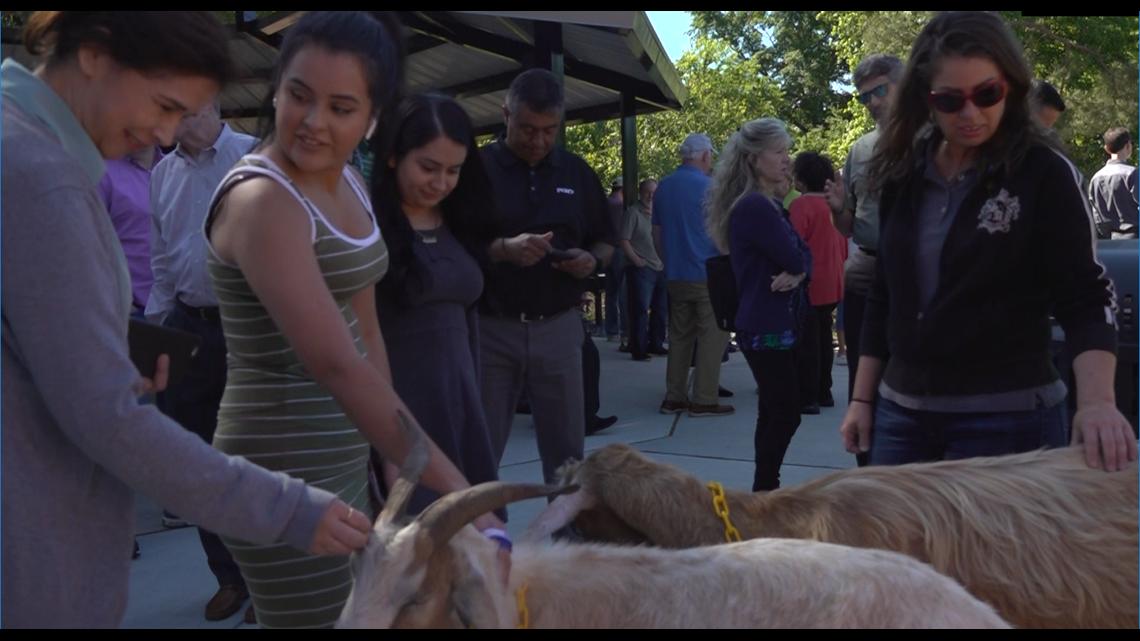 Goats help open new park in Gwinnett County