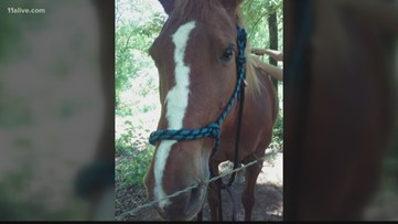 They told her they were going to help her horse. Then they sold it, she says.