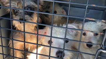 More than 160 dogs found at Rockdale County home