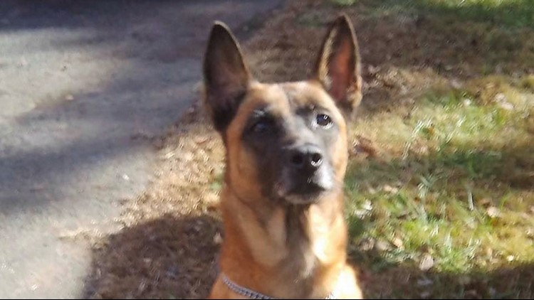 Pickens County says goodbye to retired K-9 Arros