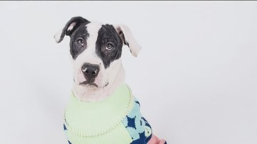 Dog shelters waive adoption fees if human wears an ugly Christmas sweater