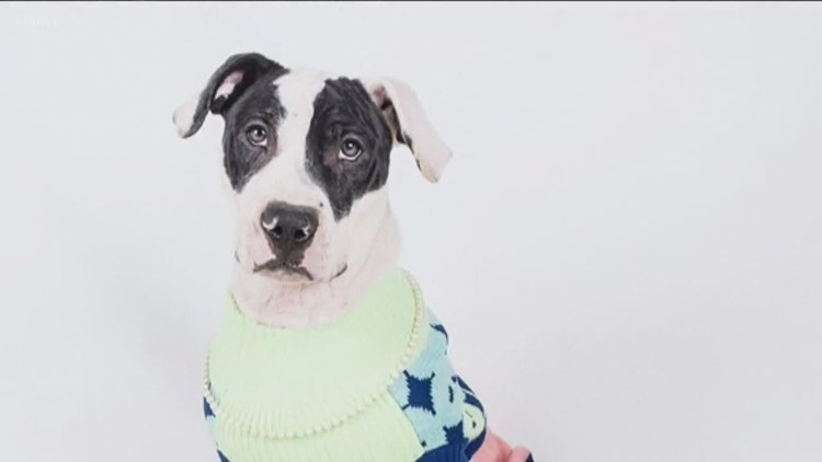 Dog shelters waive adoption fees if human wears an ugly Christmas ...