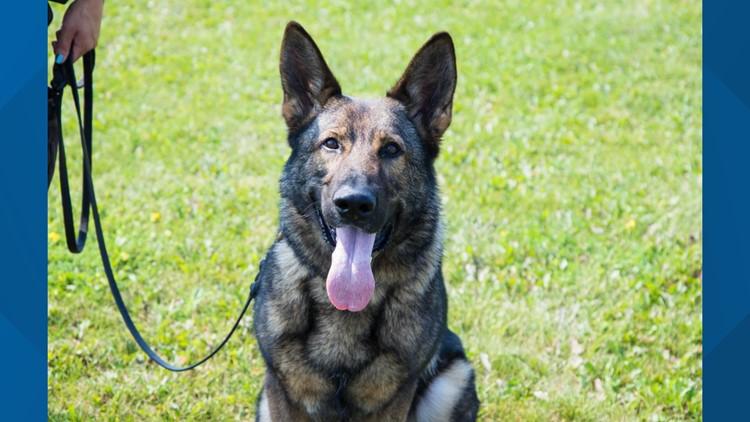 Kent Co. canine dies after medical emergency